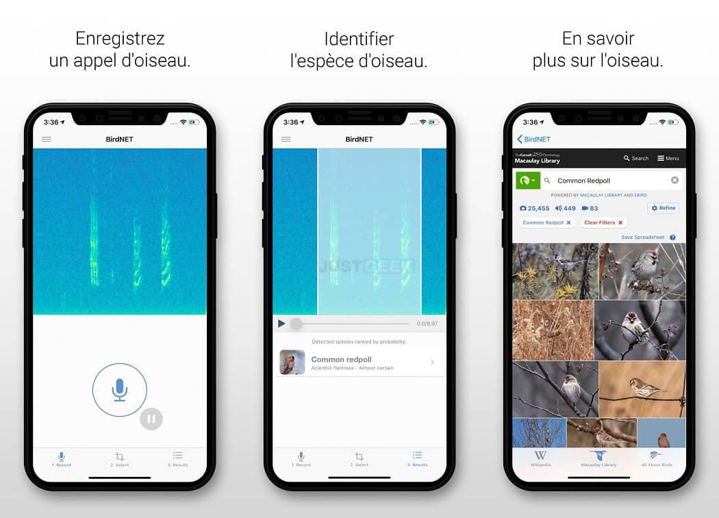 Identifier un oiseau par son chant avec l'application gratuite BirdNet