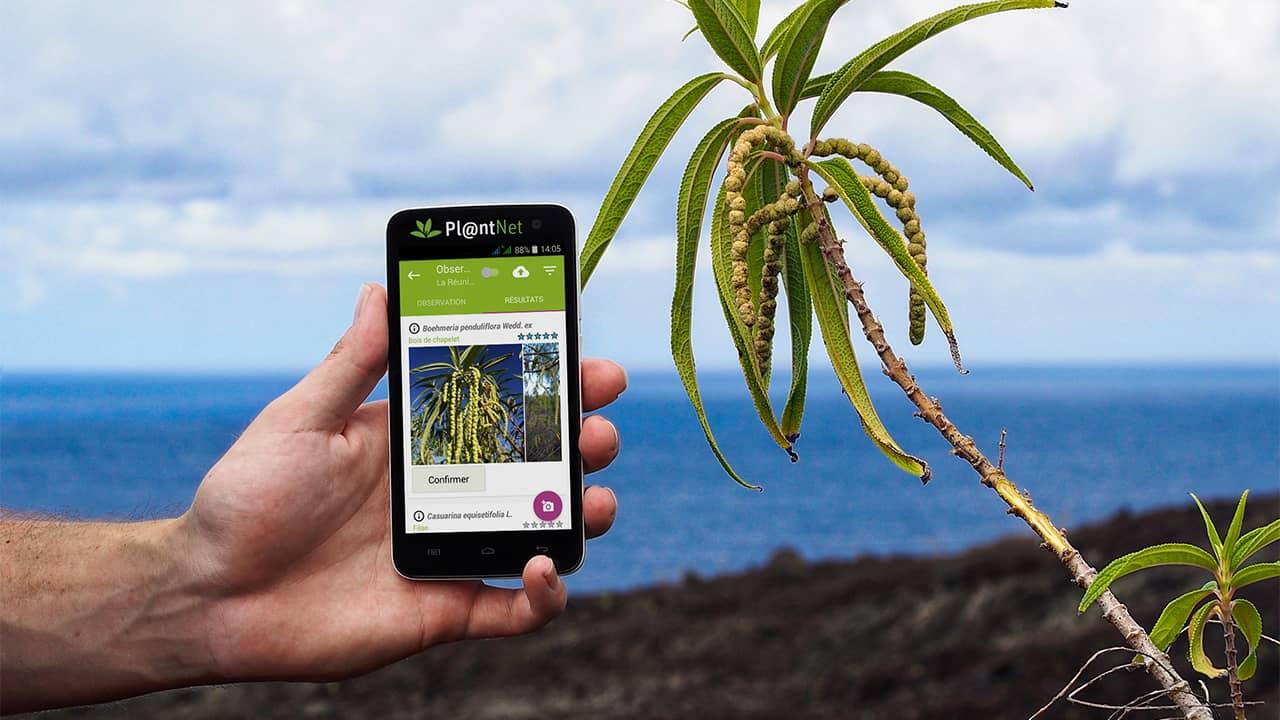 PlantNet : identifier une fleur avec votre smartphone