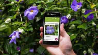 PlantNet : identifier une plante avec votre smartphone