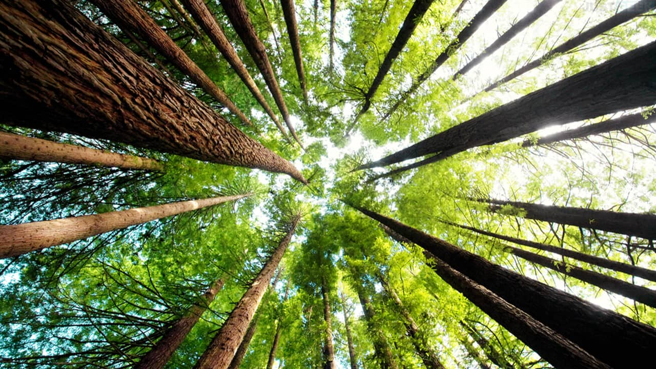 Respirer grâce aux arbres, vrai ou faux ?