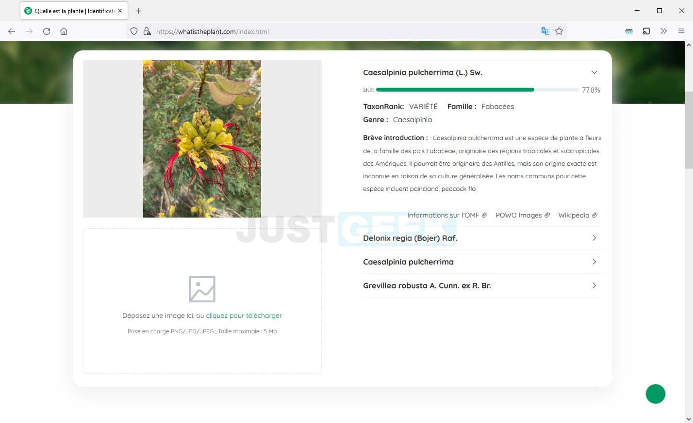 Identifier une espèce de plante