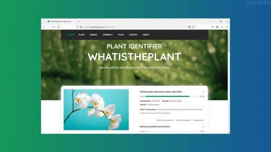 Identifier une espèce de plante, de fleur ou d'arbre à partir d'une photo