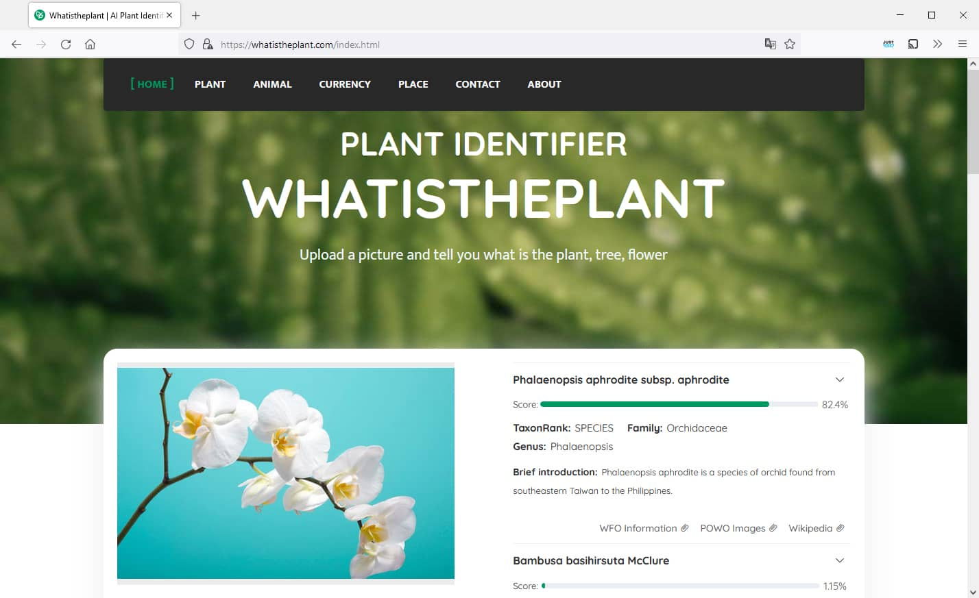 Whatistheplante : un outil en ligne gratuit pour identifier une plante à partir d'une photo